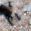 ants in car